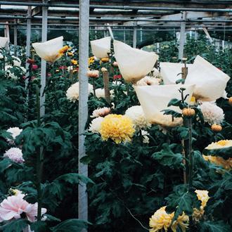 Bloom Flower Bags