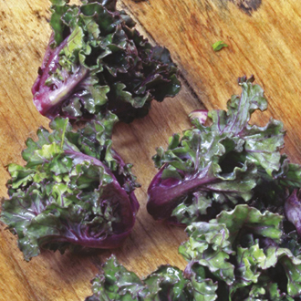 Kalettes Mixed F1 Plants