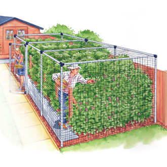 Fruit Cage - Standard 6'x12'