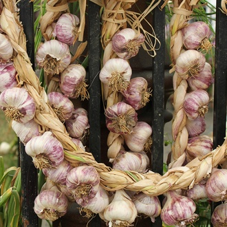 Garlic Rose Wight Bulbs (Hardneck)