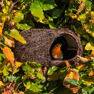 Simon King Brushwood Robin Nester