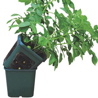 Potato Growing Pots (3 pots)
