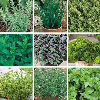 Bumper Kitchen Garden Herb Collection