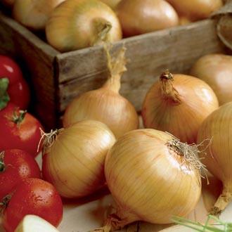 Onion Hercules Set (Spring Planting)
