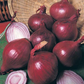 Onion (Heat Treated) Red Baron (Spring Planting)