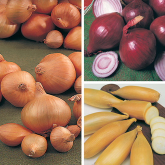 Onion (Spring Planting) Plant Collection