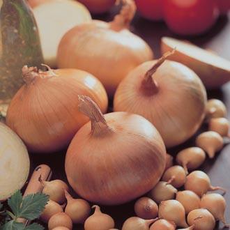 Onion Stuttgarter Giant Set (Spring Planting)