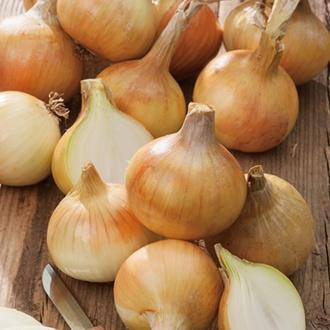 Onion (Heat Treated) Cupido Sets