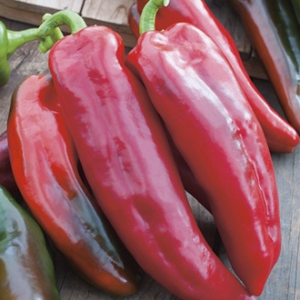 Sweet Pepper Corno Di Toro Rosso Plants