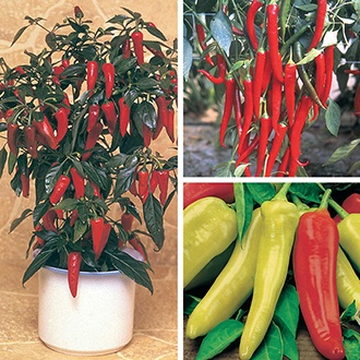 Nicely Spicy Chilli Pepper Plant Collection