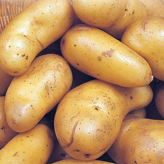 Potato Lady Christl (Extra Early Seed Potato) AGM