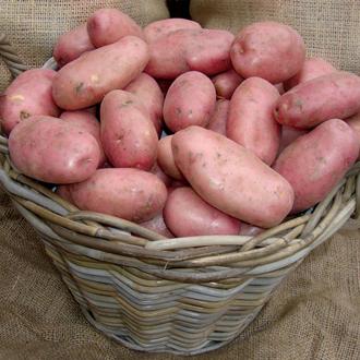 Potato Sarpo Mira (Maincrop Seed Potato)