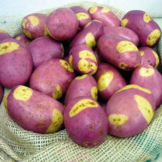 Potato (Maincrop) Pink Gypsy