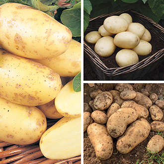 Potato Patio Refill Kit - Spring Planting