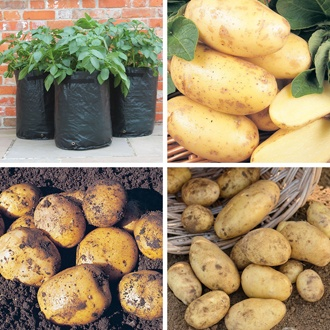 Super Second Cropping Potato Collection Kit
