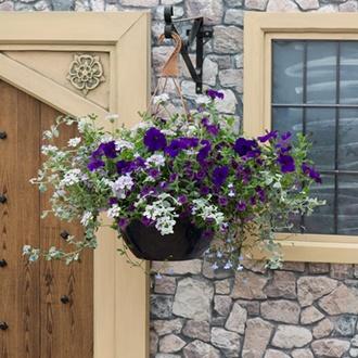 Blue to Violet Basket Mix Plants