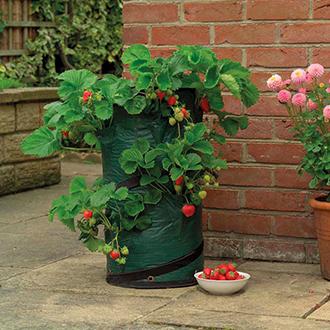 Pop-Up Strawberry Planter