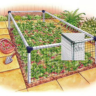 Strawberry Cage - Standard 3'x30'