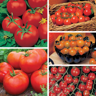 Tomato Plant Collection