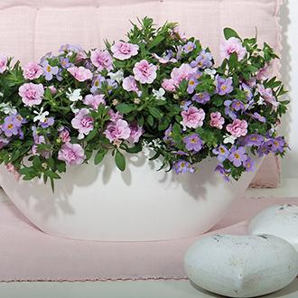 Trixi® Romance Plants