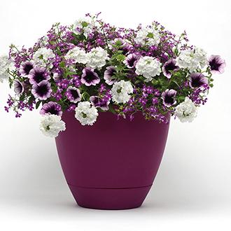Trixi® Treasure Chest Plants