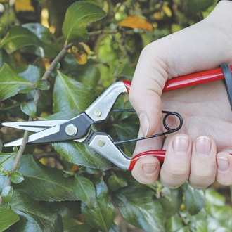 Darlac Vine Scissors