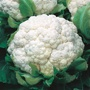 Cauliflower Walcheren Winter 3-Armado April