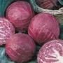 Cabbage (Red) Primero F1