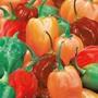 Pepper (Chilli) Hotscotch
