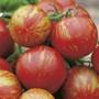Tomato (Standard) Tigerella
