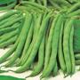 Dwarf Bean Tendergreen