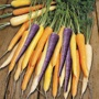 Carrot Harlequin F1 Seeds