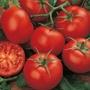 Tomato (Standard) Moneymaker (Organic) Seeds