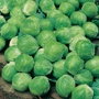 Brussels Sprout Camelot F1