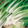 Onion (Spring) Ishikura