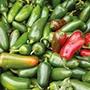 Pepper (Chilli) Jalapeno
