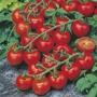 Tomato (Cherry) Red Cherry Seeds