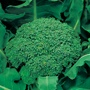 Broccoli (Autumn) Green Calabrese