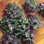 Kalettes® Mixed