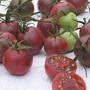 Tomato (Cherry) Chocolate Cherry