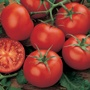Tomato Moneymaker Bumper Seed Pack