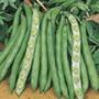 Broad Bean Imperial Green Longpod