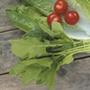 Spinach (Oriental) Mikado F1
