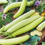 Aubergine Green Knight F1 Vegetable Seed