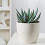 Aloe Mix Flower Seeds