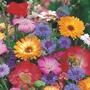 RHS Cottage Garden Mix