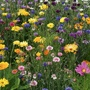 RHS Flowers For Wildlife Bright Mix