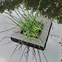 Floating Pond Plant Basket 25cm