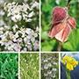 Aquatic Plant Native Collection