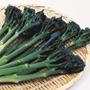 Broccoli Tenderstem Inspiration F1 Veg Plants